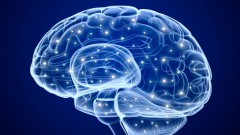 מוח (איור אילוסטרציה)