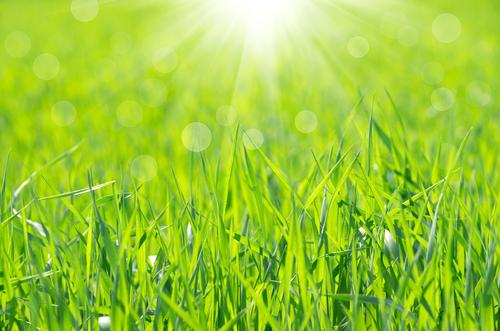 אלרגיה לדשא (צילום: אילוסטרציה)