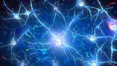 תאי עצב (הדמיית אילוסטרציה)