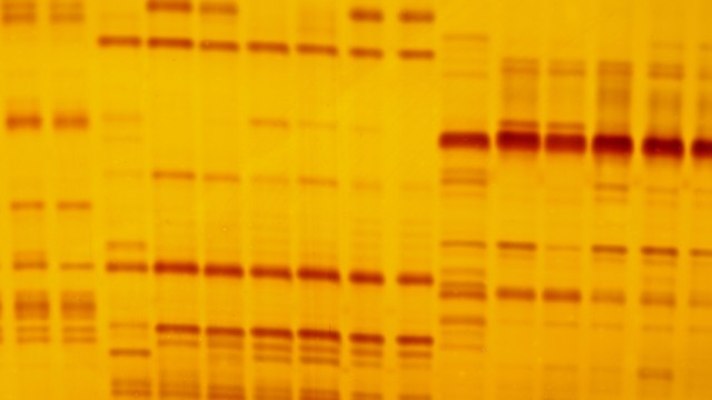 ריצוף גנטי (צילום: אילוסטרציה)