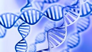 מוטציות גנטיות (צילום: אילוטסרציה)