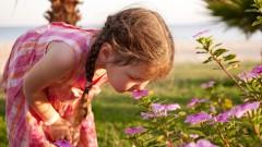 ילדה מריחה פרחים (צילום: אילוסטרציה)