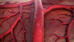 כלי דם (צילום: אילוסטרציה)