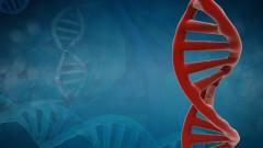 מוטציה גנטית (צילום: אילוסטרציה)