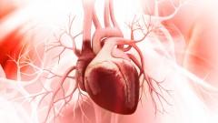 לב אנושי (צילום: אילוסטרציה)