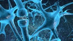 סינפסות במוח (איור אילוסטרציה)