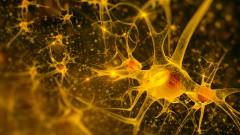 נוירונים במוח (הדמיית אילוסטרציה)