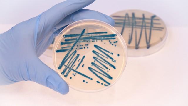 תרבית חיידקים בצלחת פטרי (צילום: אילוסטרציה)