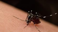 """יתוש אדס מצרי, המעביר את נגיף ה""""זיקה"""" (צילום: אילוסטרציה)"""