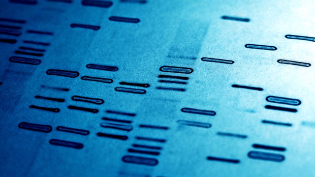"""גנטיקה, ריצוף דנ""""א (צילום: אילוסטרציה)"""