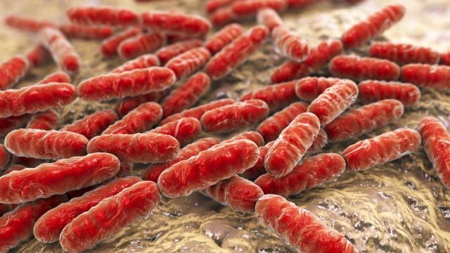 אוכלוסיית חיידקים במעיים (הדמית אילוסטרציה)